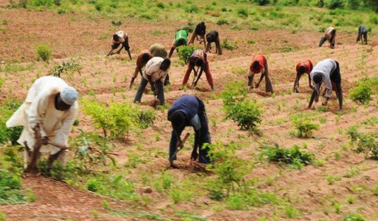 border-closure-good-gesture-from-fg-to-farmers-farmers-rice-millers